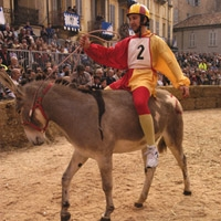 Traditional Donkey Race